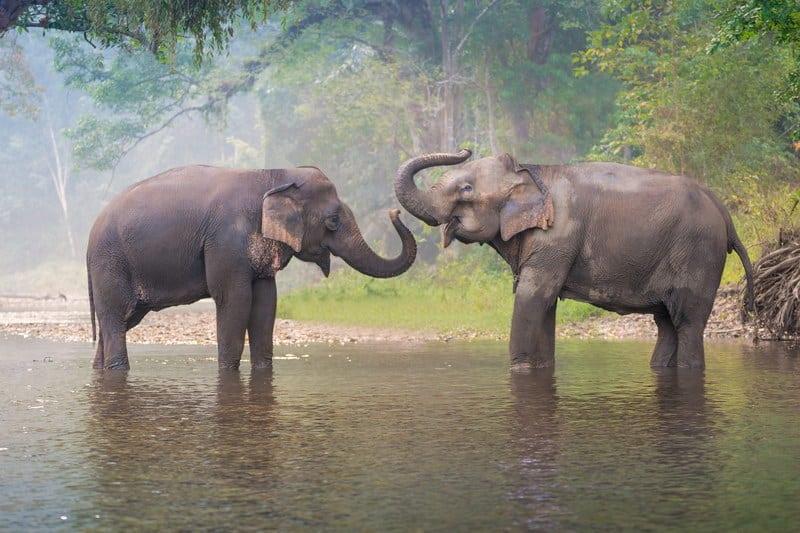 Elephant Nature Park. Центр реабилитации слонов в Чианг Маи