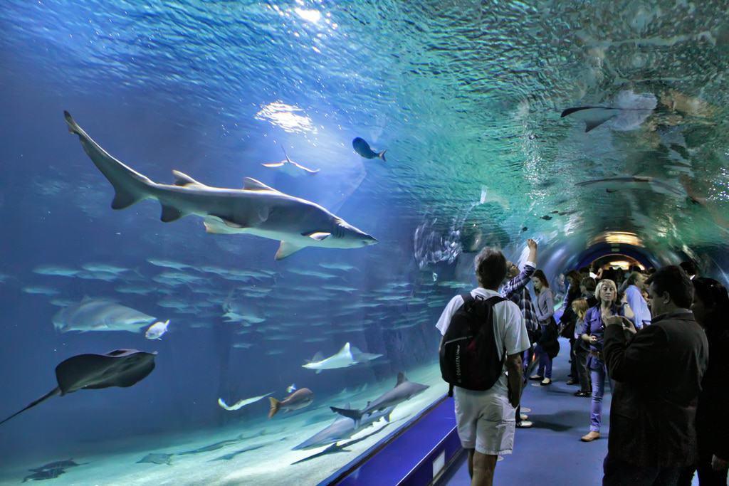 Oceanogràfic -Океанариум в Городе искусств и наук. Валенсия, Испания.