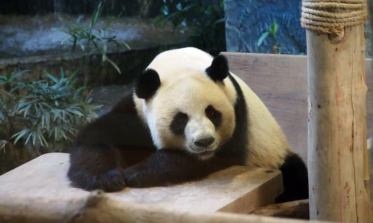 Зоопарк Чиангмаи