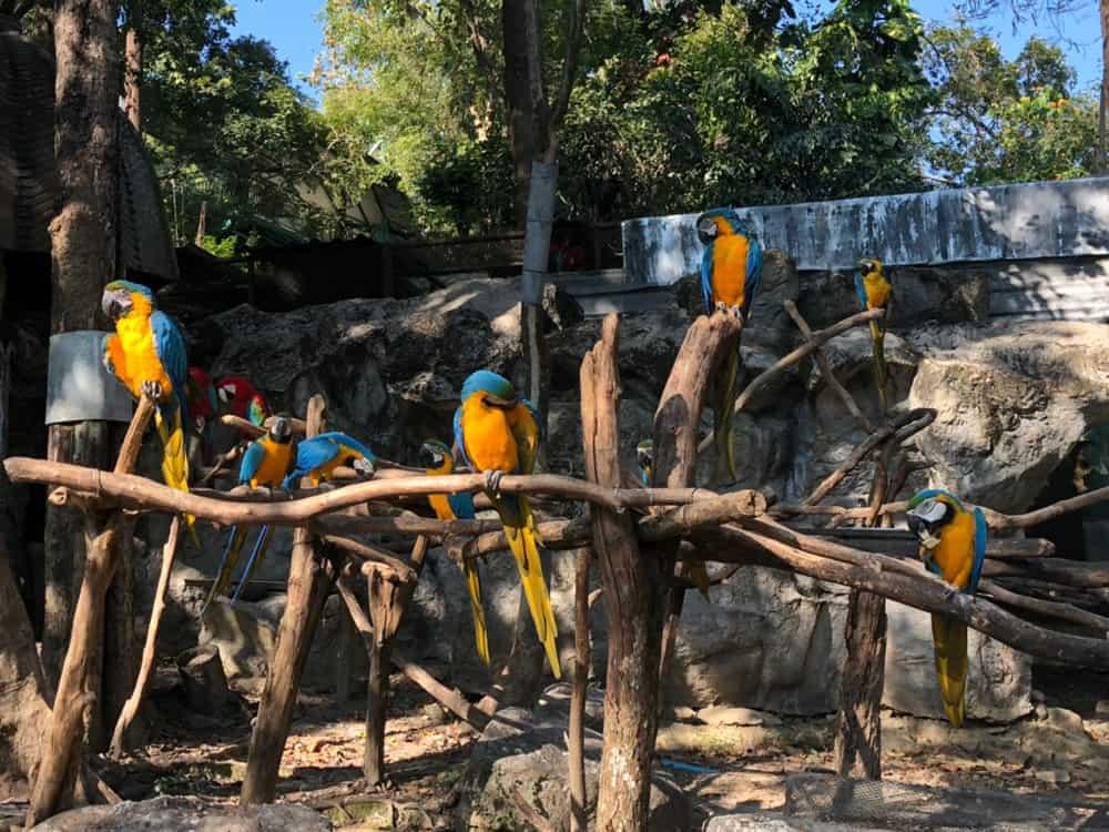 Попугаи в Чиангмайском зоопарке